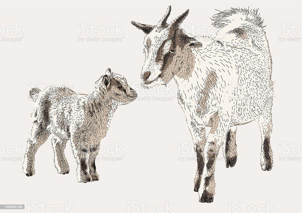 Goat & Kid royalty-free stock vector art