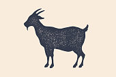 Goat. Vintage logo, retro print, poster for Butchery meat shop, goat silhouette. Logo template for meat business, meat shop. Isolated black silhouette goat on white background. Vector Illustration