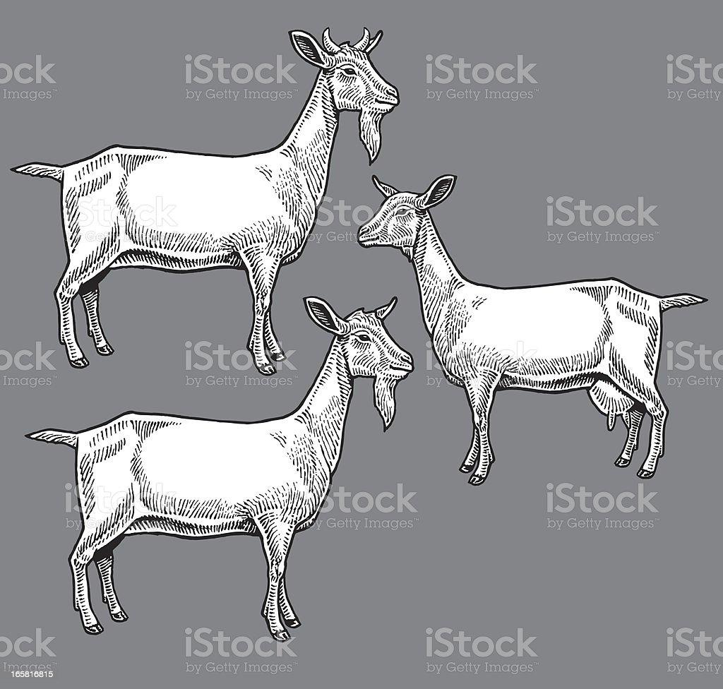 Goats - Farm Animals royalty-free stock vector art