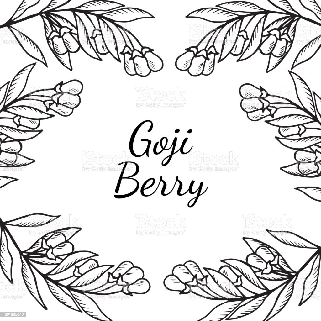 Goji, Square banner royalty-free goji square banner stock vector art & more images of antioxidant