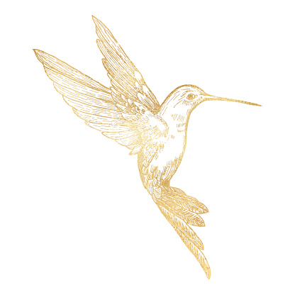 Gold Bee Hummingbird Isolated. Hand Painted Clip Art Design Element.