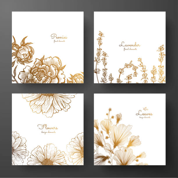 Gold collection of cards design with peonies, lavender, chamomile and leaves of ginkgo biloba. Template frame for birthday and greeting card, wedding invitation, flyer, package design. Gold collection of cards design with peonies, lavender, chamomile and leaves of ginkgo biloba. Template frame for birthday and greeting card, wedding invitation, flyer, package design. daisy stock illustrations