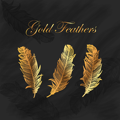Gold Feathers Collection with Blackboard Background. Design Element for Greeting Cards and Wedding, Birthday and other Holiday and Summer Invitation Cards Background.