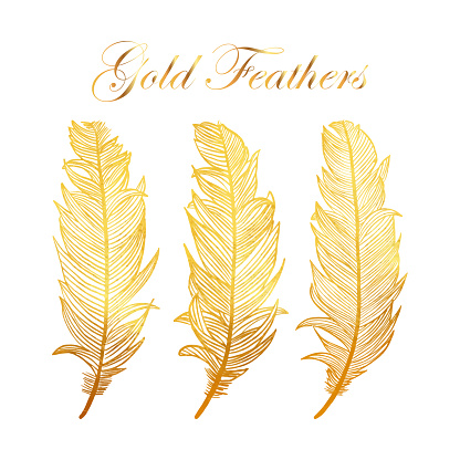 Gold Feathers Collection with White Background. Design Element for Greeting Cards and Wedding, Birthday and other Holiday and Summer Invitation Cards Background.