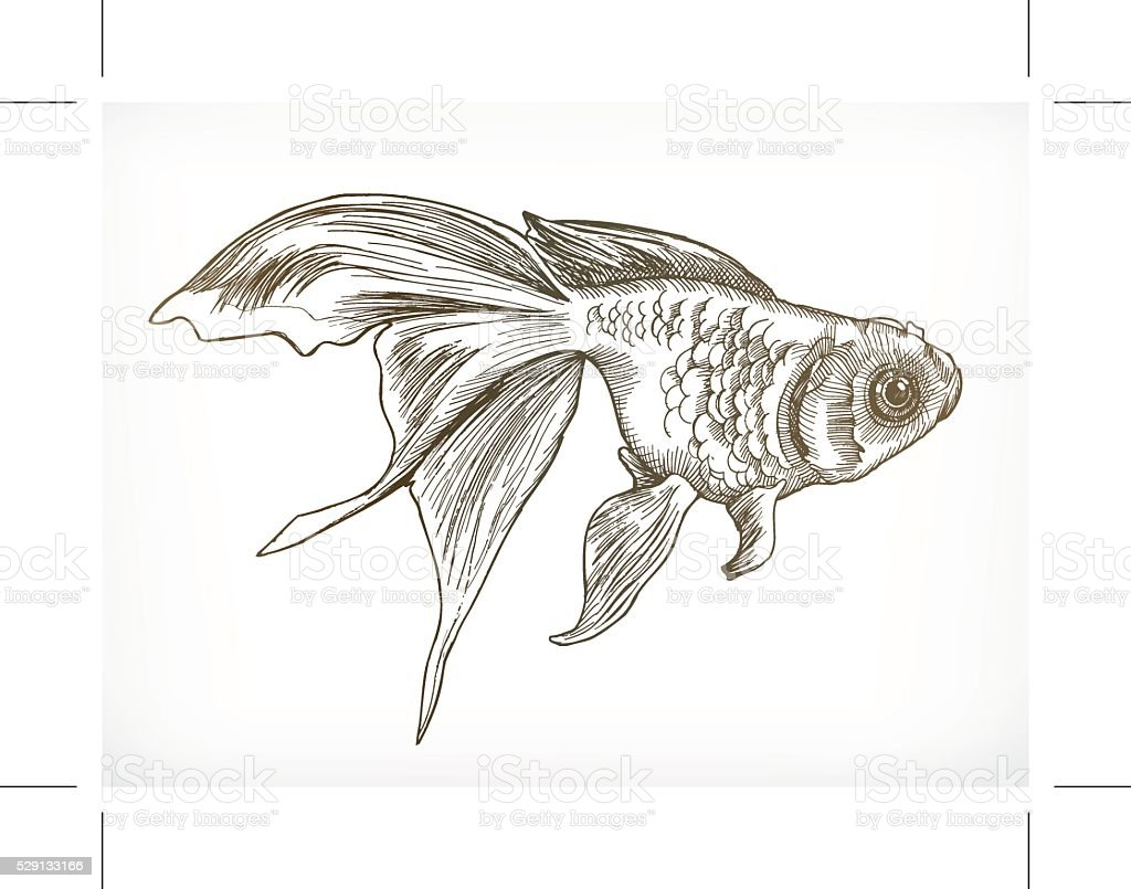 Gold Fish Sketches Stock Vector Art U0026 More Images Of Animal 529133166 | IStock