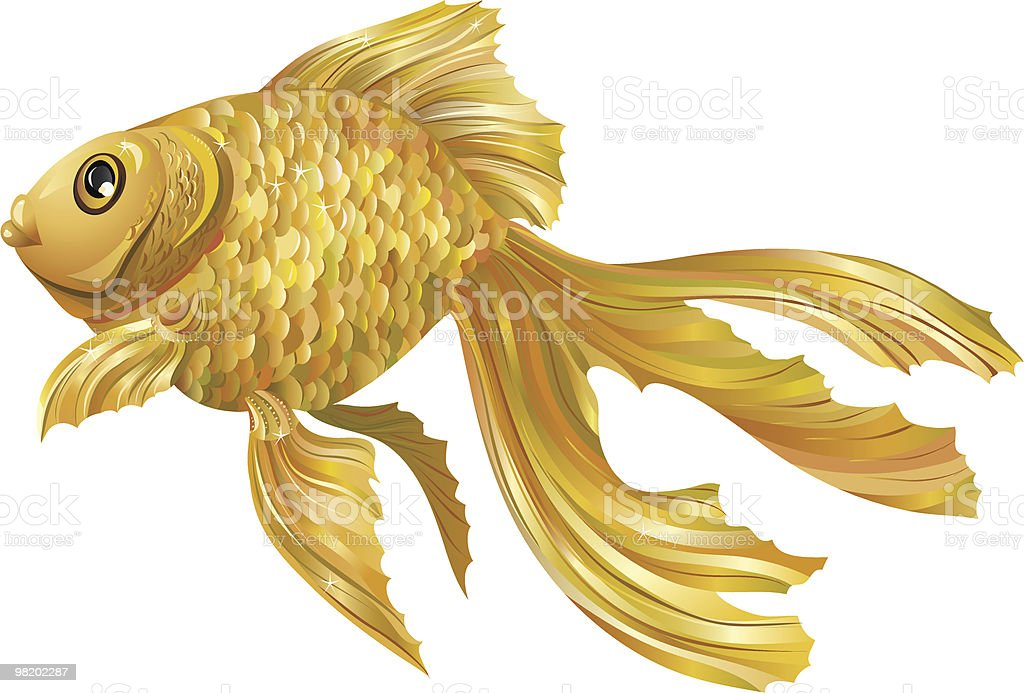 gold fish royalty-free gold fish stock vector art & more images of color image