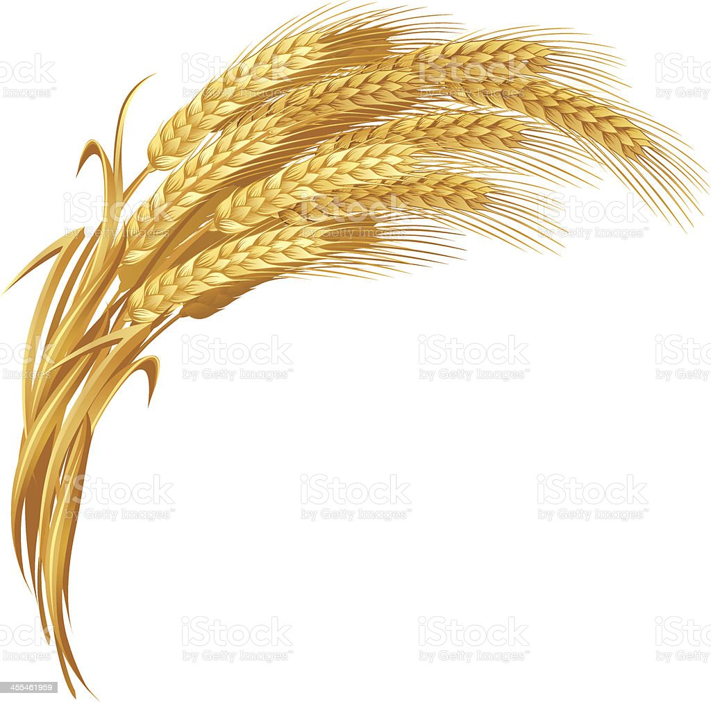 Gold Wheat royalty-free gold wheat stock vector art & more images of agriculture