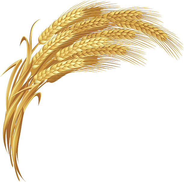 gold weizen - dinkelbrot stock-grafiken, -clipart, -cartoons und -symbole