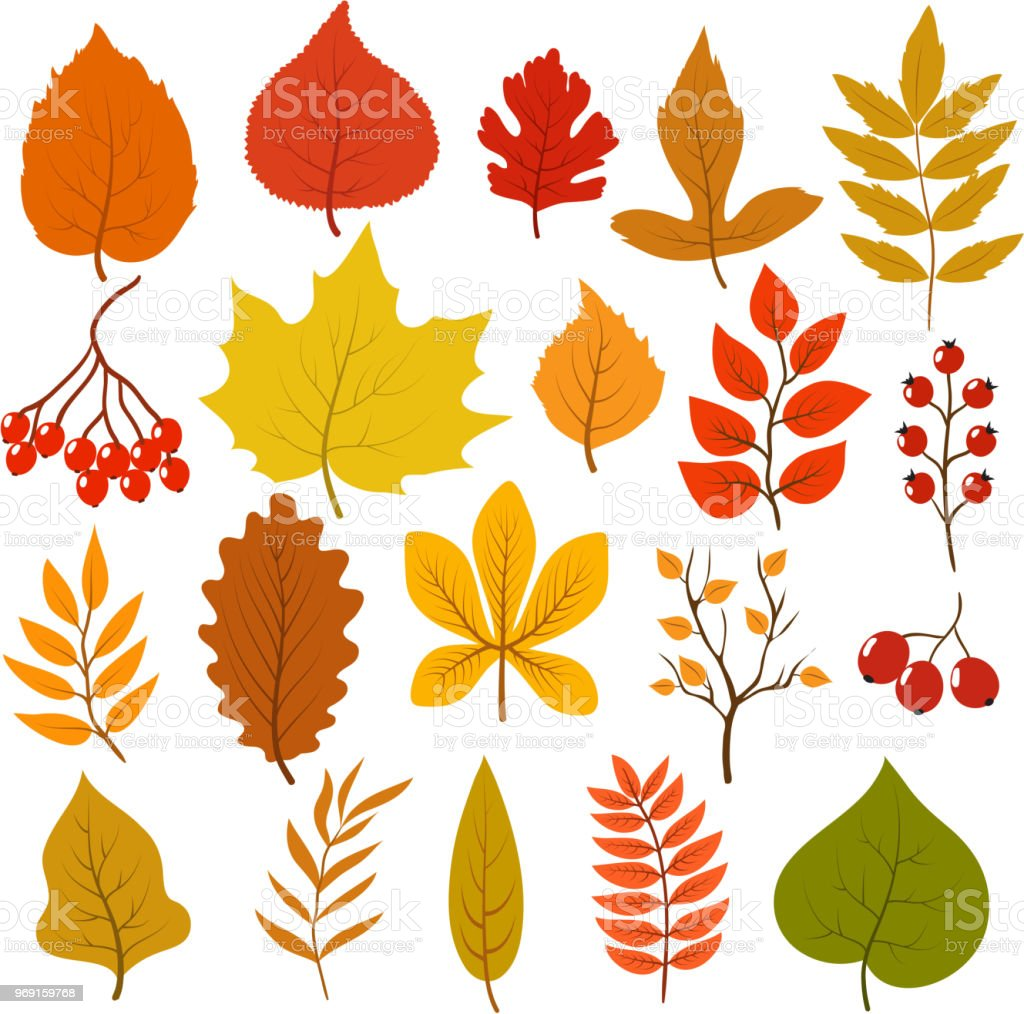 Golden And Red Autumn Leaves Brunches And Berries Fall Leaf Vector Cartoon Collection Isolated On White Background Stock Illustration Download Image Now Istock Cartoon squirrel climbing up tree trunk. golden and red autumn leaves brunches and berries fall leaf vector cartoon collection isolated on white background stock illustration download image now istock