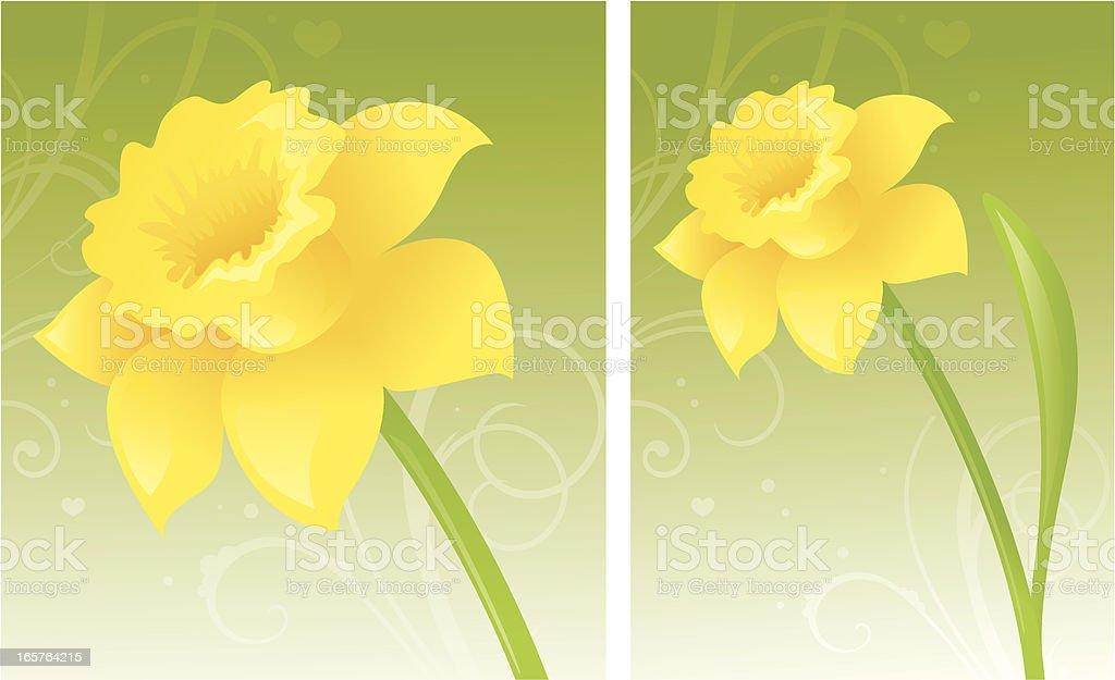 Golden Daffodil royalty-free stock vector art