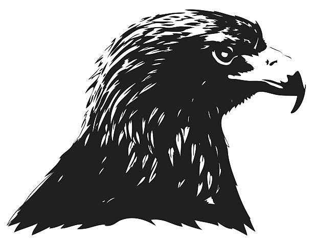 Águila real retrato - ilustración de arte vectorial
