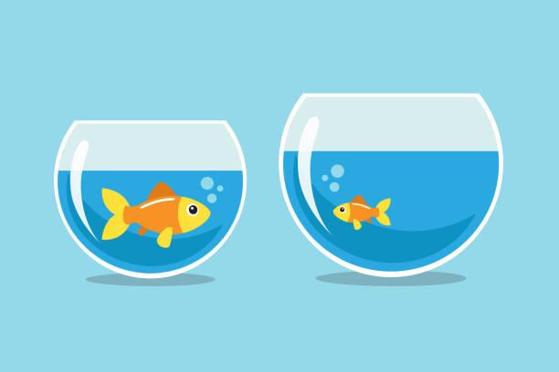 Golden pez  - ilustración de arte vectorial