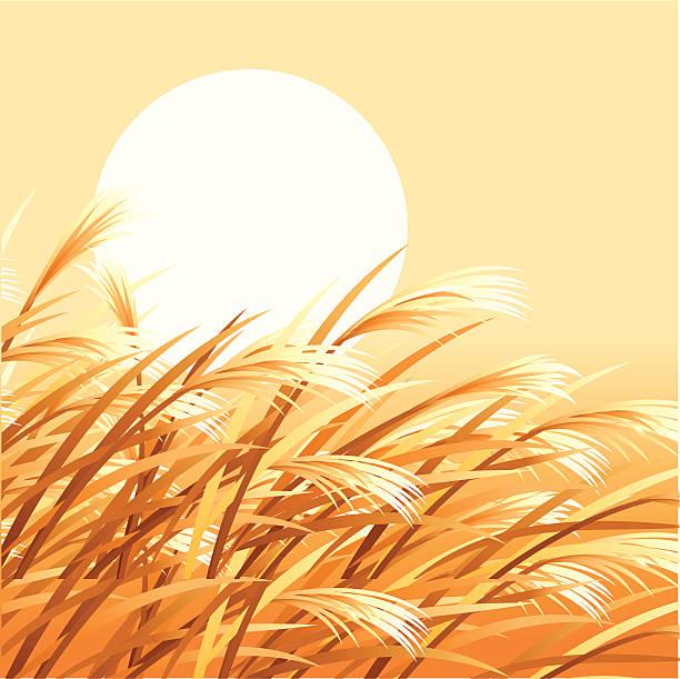 ilustraciones, imágenes clip art, dibujos animados e iconos de stock de golden grano de - straw field