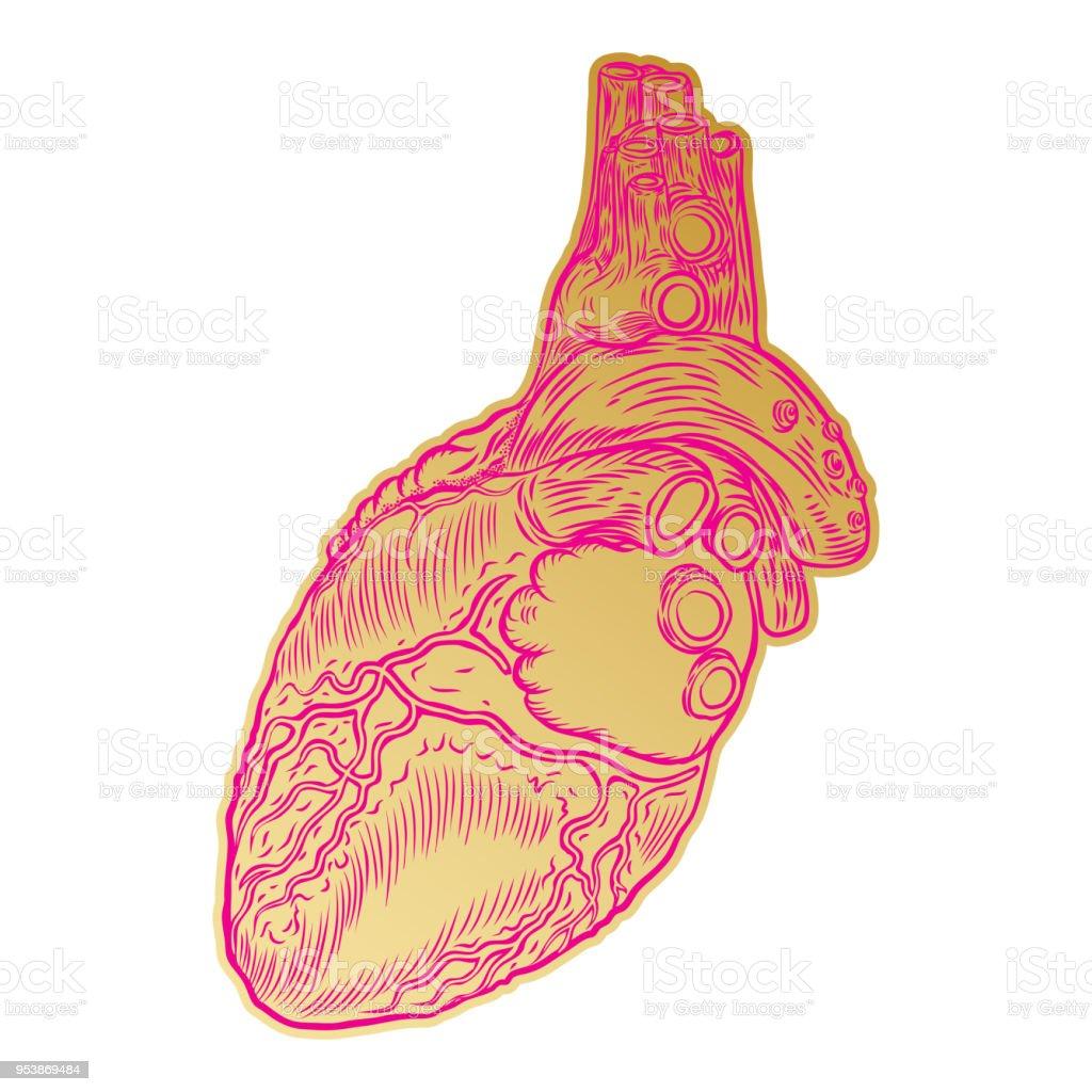 Goldene Menschliche Herz In Der Hand Gezeichnete Stil Anatomische ...