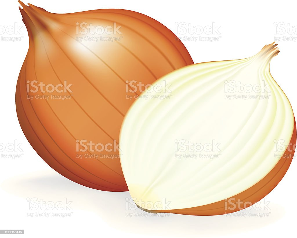 Golden onion whole and half. vector art illustration