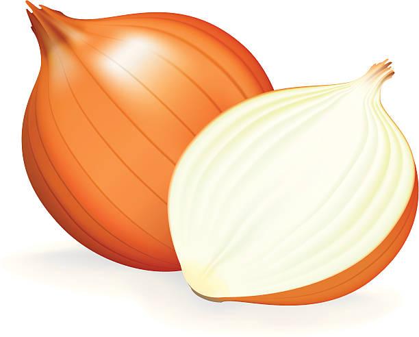 Onion on Lettuce Clip Art