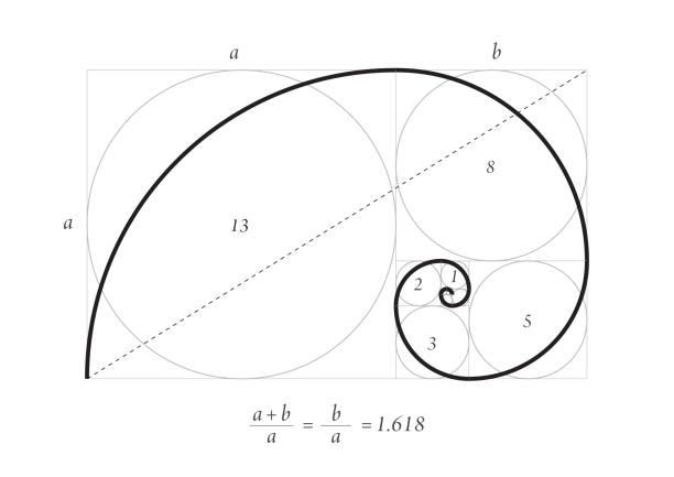 golden proportion vector - золотое сечение stock illustrations