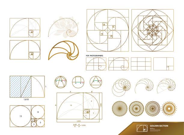 golden ratio for creative design vector illustration. - золотое сечение stock illustrations
