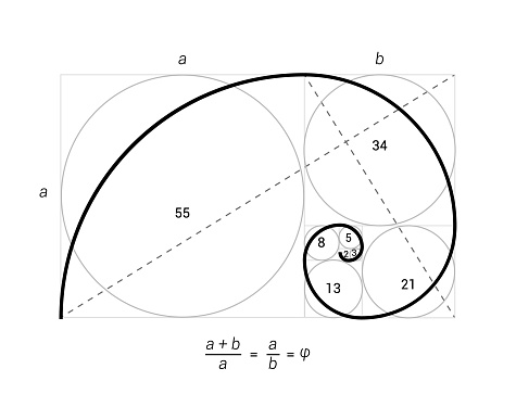 Golden ratio vector proportion spiral section. Fibonacci golden ratio geometry
