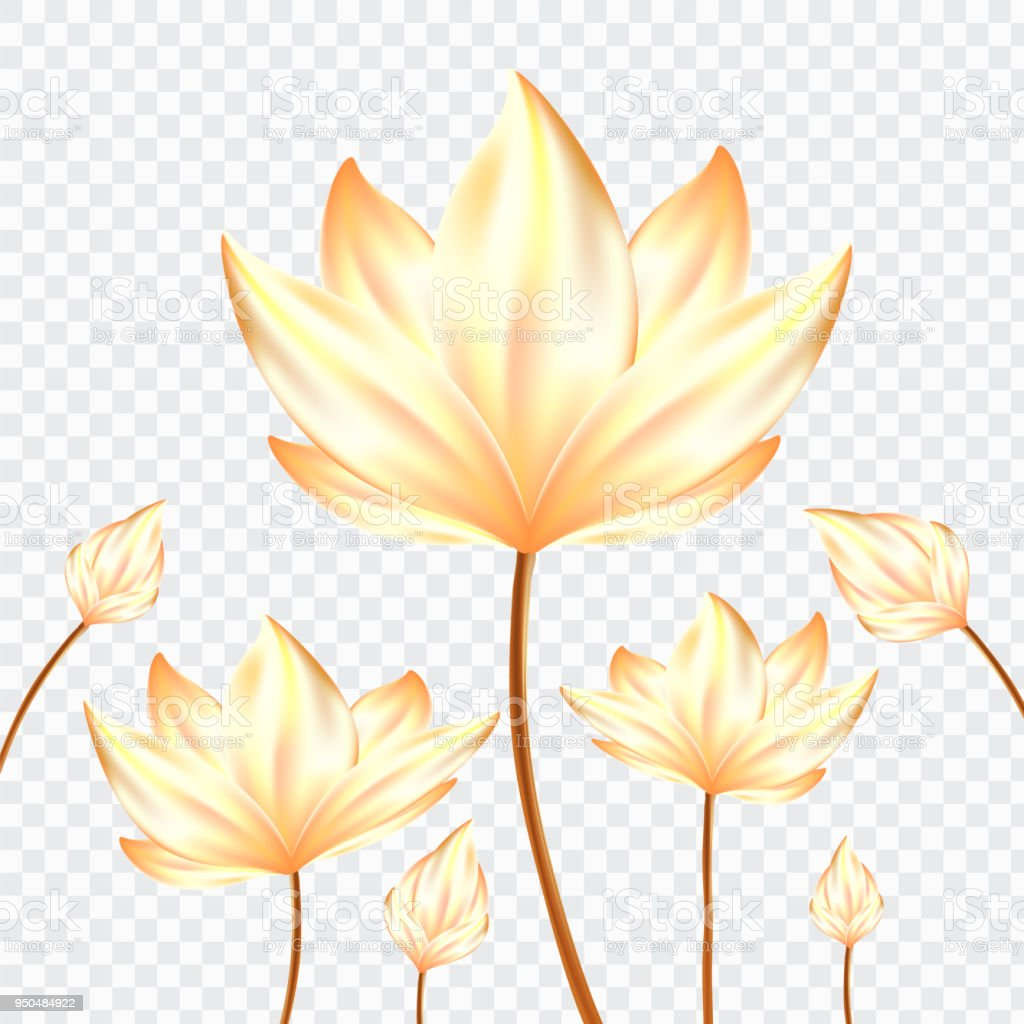 Golden Realistic Lotus Flowers On Isolate Background Stock Vector