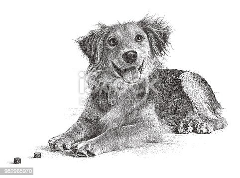 Stipple illustration of a Golden Retriever, Collie mixed breed dog in an animal shelter