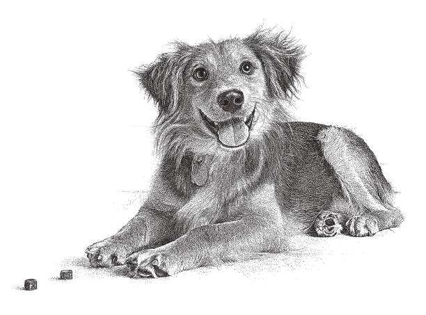 golden retriever, collie mixed breed dog hoping to be adopted - dog treats stock illustrations