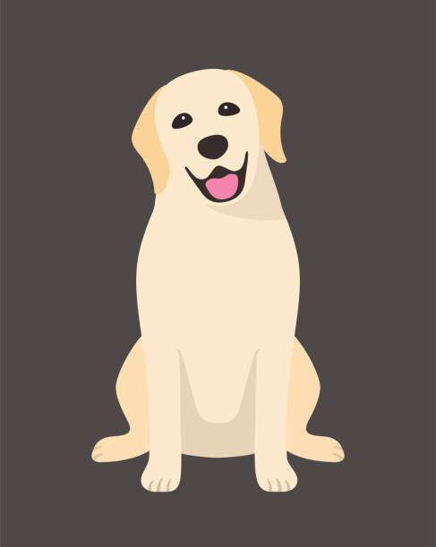 illustrazioni stock, clip art, cartoni animati e icone di tendenza di golden retriever is sitting in the front, looking at you with its head tilted. - labrador retriever