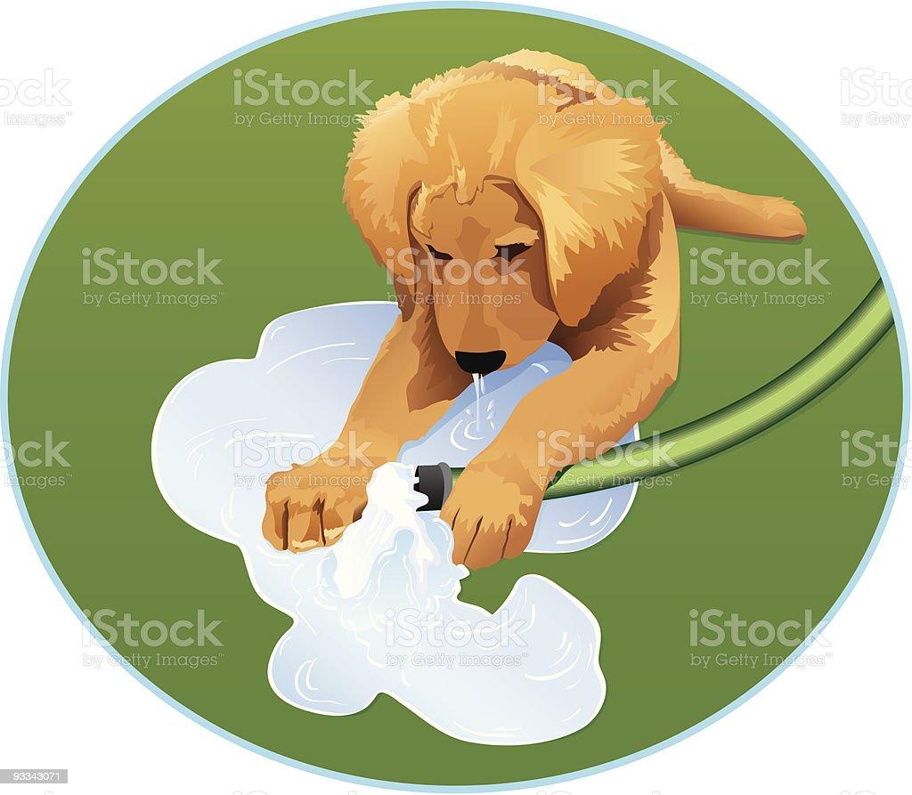 Golden Retriever Puppy Plays With a Garden Hose royalty-free golden retriever puppy plays with a garden hose stock vector art & more images of animal