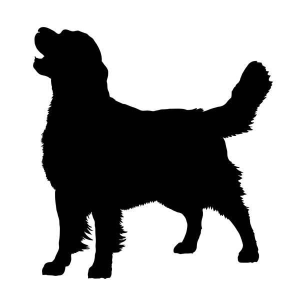 illustrazioni stock, clip art, cartoni animati e icone di tendenza di golden retriever, silhouette - golden retriever