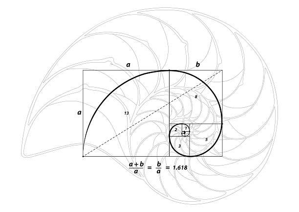 golden abschnitt verhältnis göttliche anteil und goldener spirale shell-linie - bildformate stock-grafiken, -clipart, -cartoons und -symbole