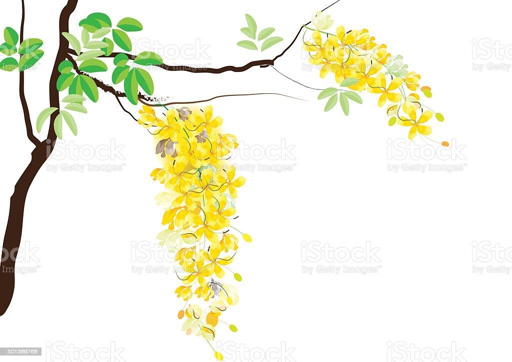 Golden shower flowers or ratchaphruek yellow flowers watercolor look golden shower flowers or ratchaphruek yellow flowers watercolor look royalty free golden shower flowers mightylinksfo