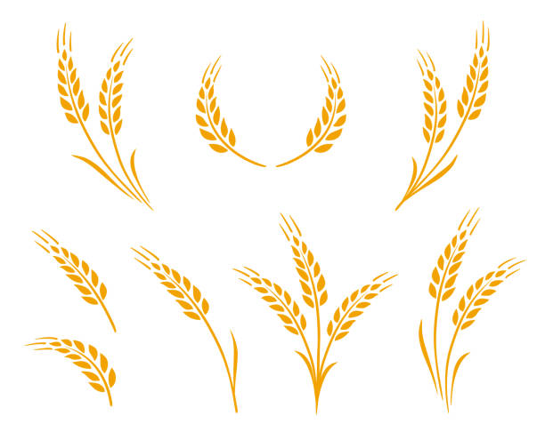 golden wheat ears icons logo set golden hand drawn wheat ears icons logo food set wheat stock illustrations