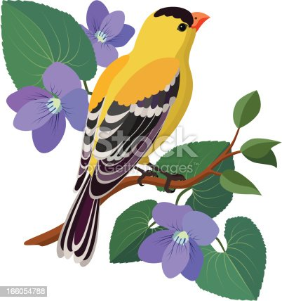 A vector illustration of a goldfinch and violets. The goldfinch is the state bird of New Jersey, USA and violets are the state flower.