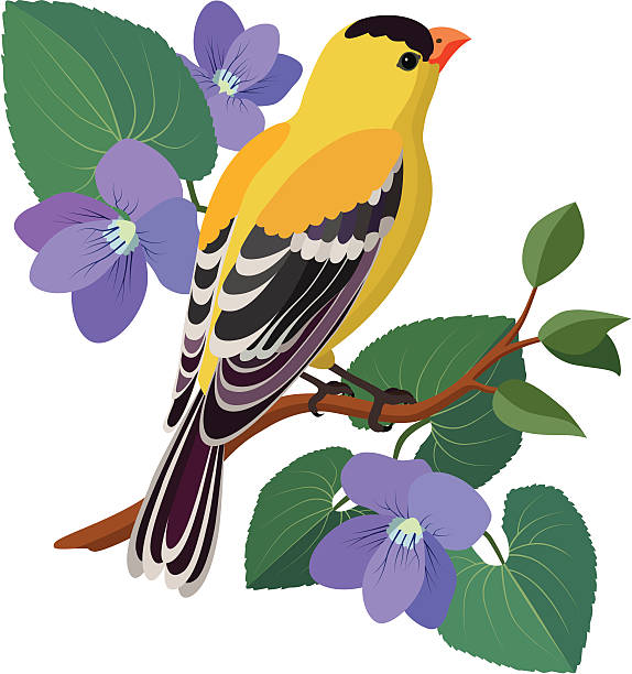 goldfinch and violets A vector illustration of a goldfinch and violets. The goldfinch is the state bird of New Jersey, USA and violets are the state flower. gold finch stock illustrations