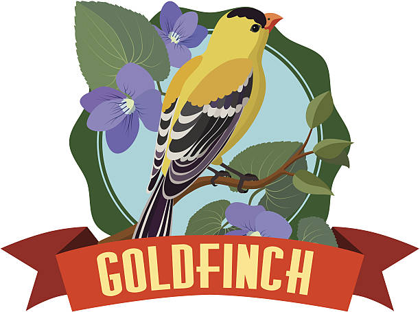 goldfinch A vector illustration of a goldfinch. gold finch stock illustrations