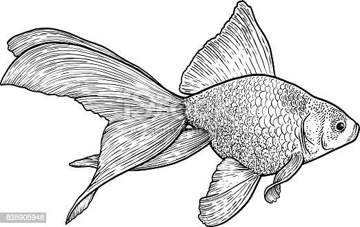 Goldfish line drawing - photo#43