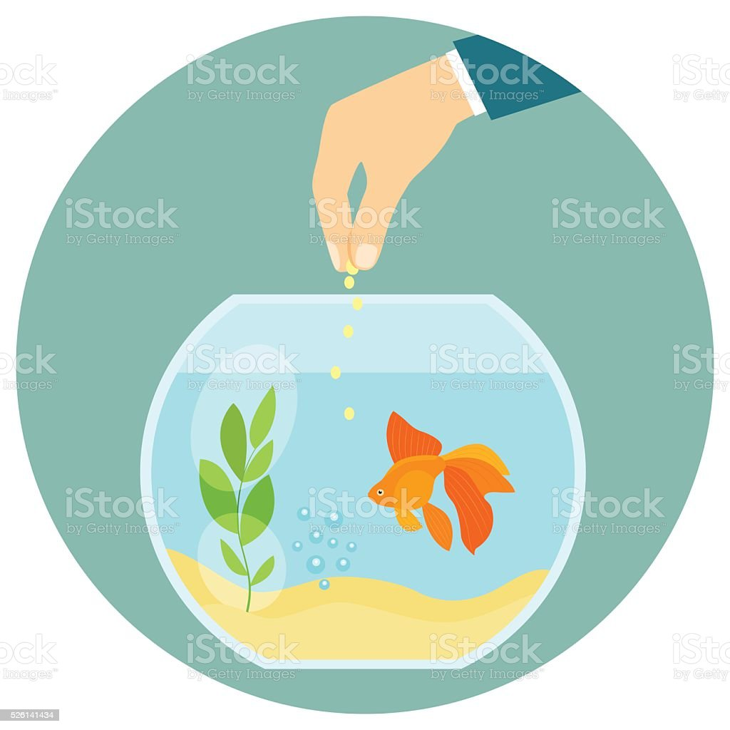 Goldfish in aquarium isolated. Feeding goldfish. Flat vector illustration vector art illustration