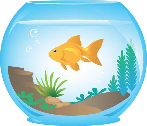 goldfische in schüssel - fischglas stock-grafiken, -clipart, -cartoons und -symbole