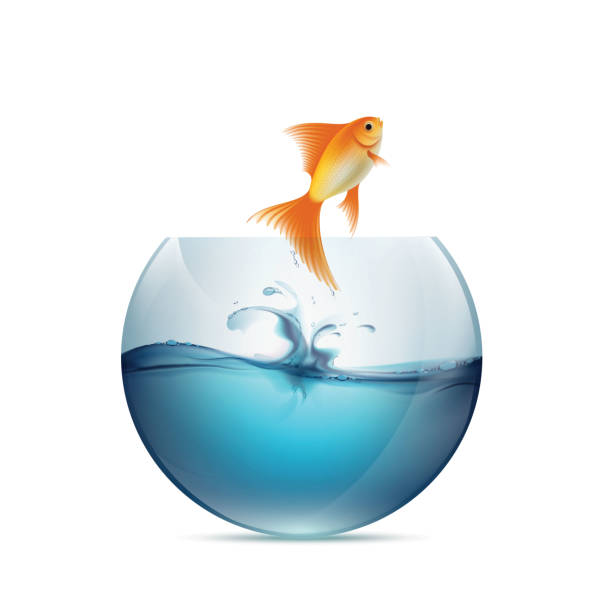 goldfisch jumping von der aquarium. - fischglas stock-grafiken, -clipart, -cartoons und -symbole