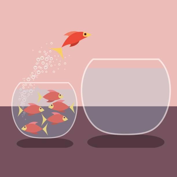 goldfische springen aus dem wasser. vektor-flaches design - fischglas stock-grafiken, -clipart, -cartoons und -symbole