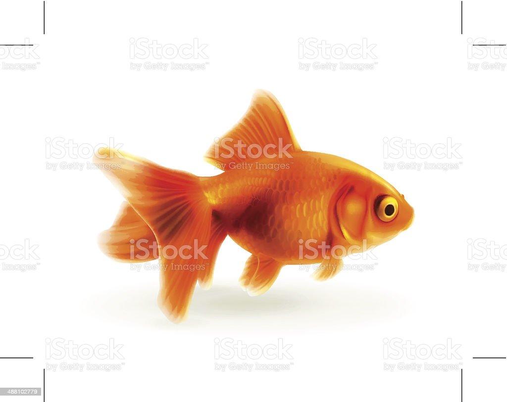 Goldfish, photorealistic illustration vector art illustration