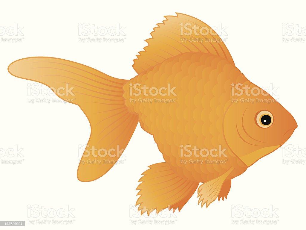 Goldfish vector art illustration