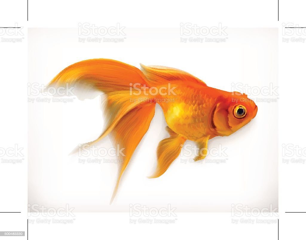 Goldfish vector illustration vector art illustration