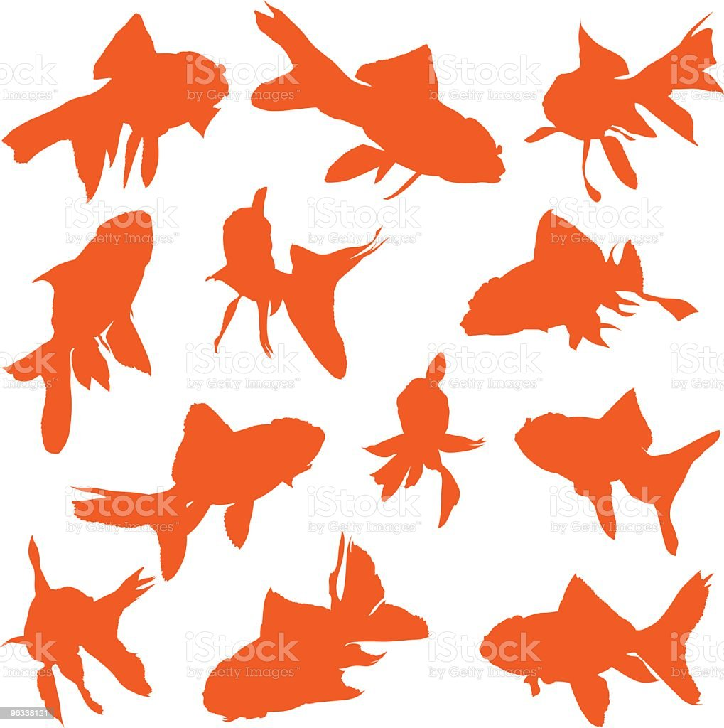 Goldfish Vectors vector art illustration