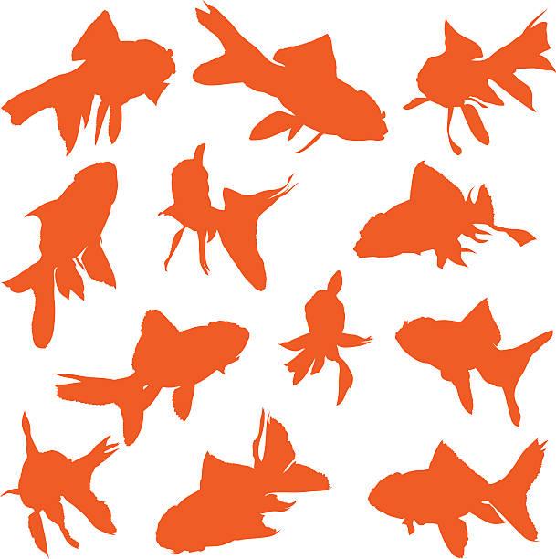 Goldfish Vectors vector art illustration