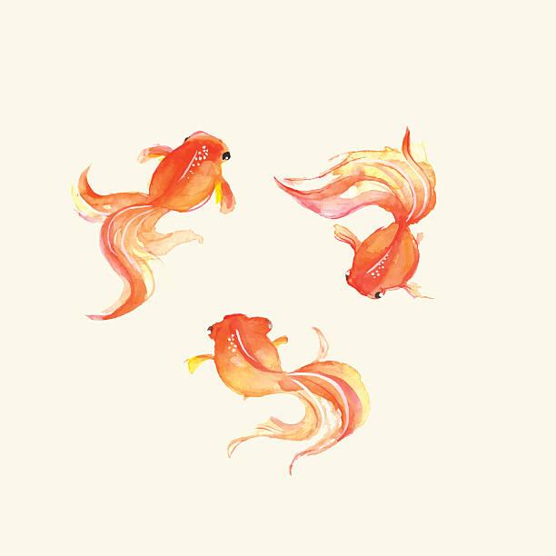 金魚 イラスト素材 Istock