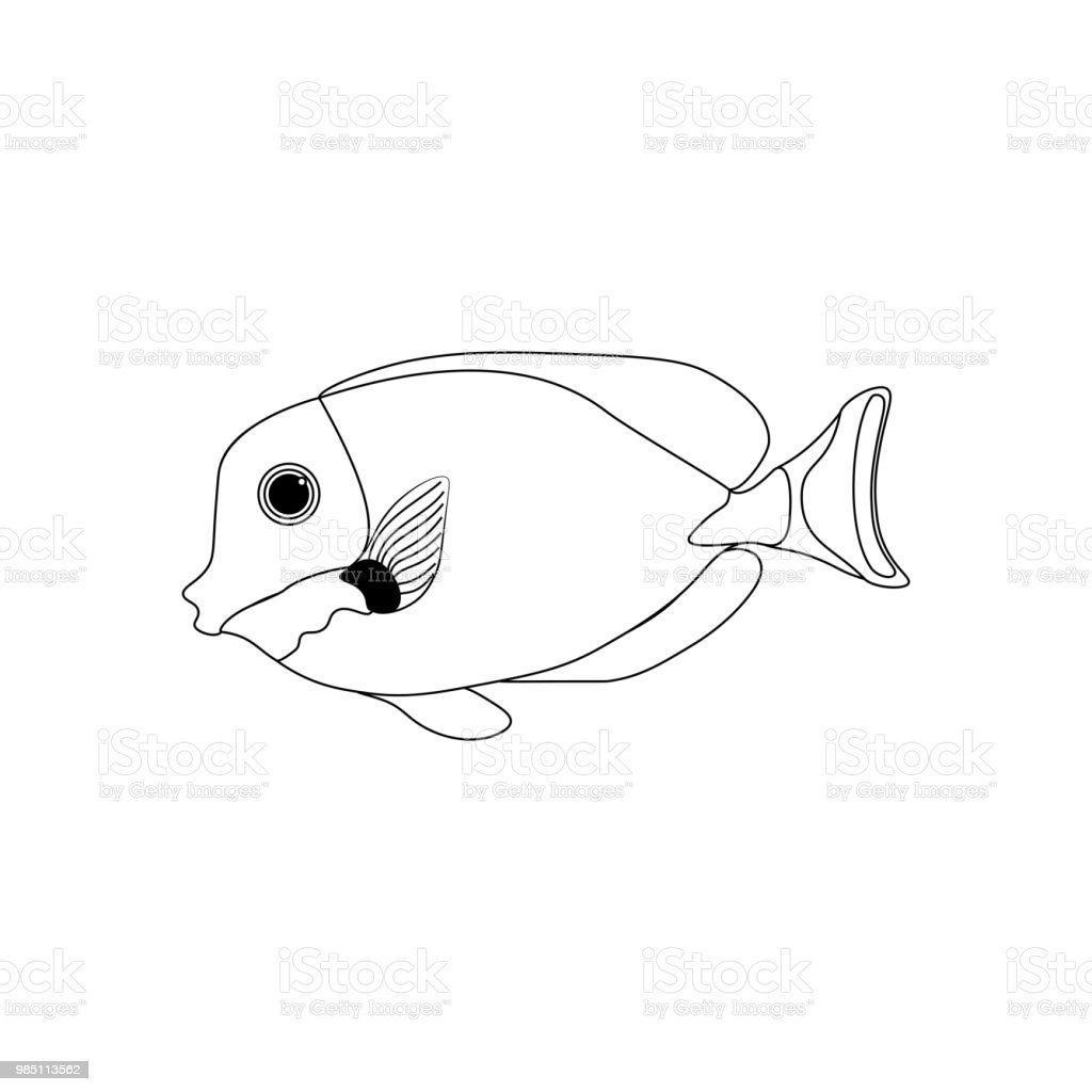 How to draw a queen angelfish step by step. Drawing tutorials for ... | 1024x1024