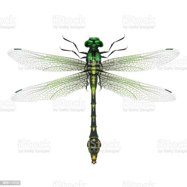Gomphus vulgatissimus dragonfly vector id668410202?b=1&k=6&m=668410202&s=612x612&h=hgd8nxqtdpj62dc9ecc6rgl6clt2mog0kiq7tu56a3m=