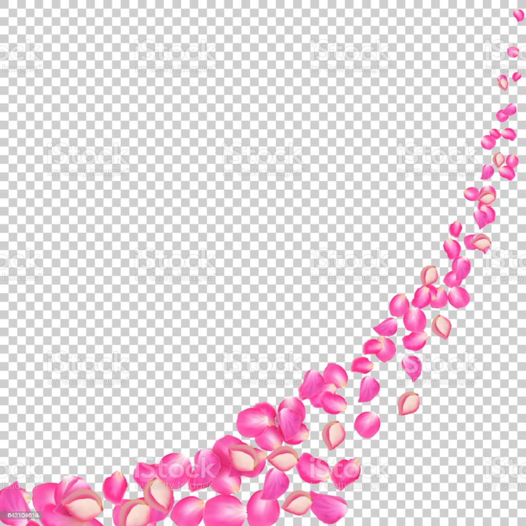 Gone with the Wind rose petals. Realistic vector pink petals on transparent background vector art illustration