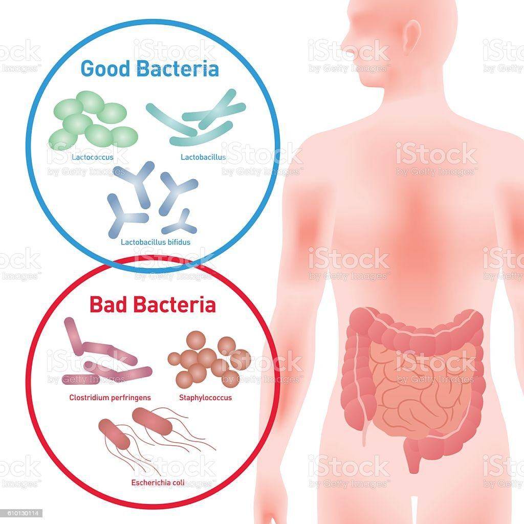 Good Bacteria and Bad Bacteria vector art illustration